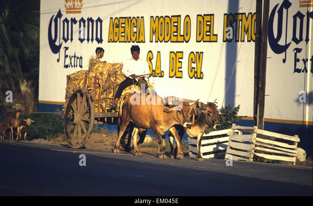 traffic in Mexico City is contributing to the pollution whiles in Oaxaca the oxcarts seem more environmentaly friendly - Stock Image