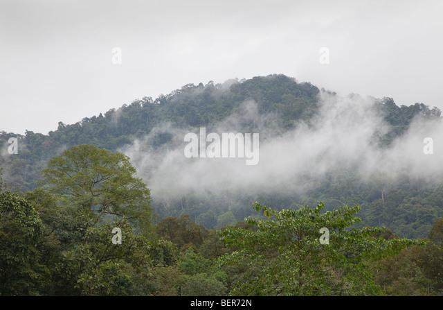 Tropical misty rainforest jungle view, Malaysia - Stock-Bilder