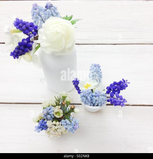 Three blue & white spring posies in white milk bottles. Blue grape hyacinths, narcissus, ranunculus, wax flowers. - Stock Image