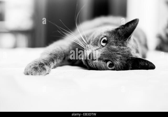 Cat lying on sofa - Stock Image
