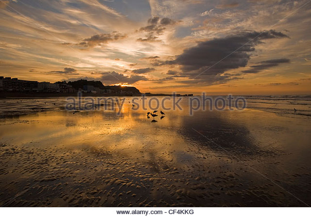 Birds wading in the low tide at sunrise. - Stock Image