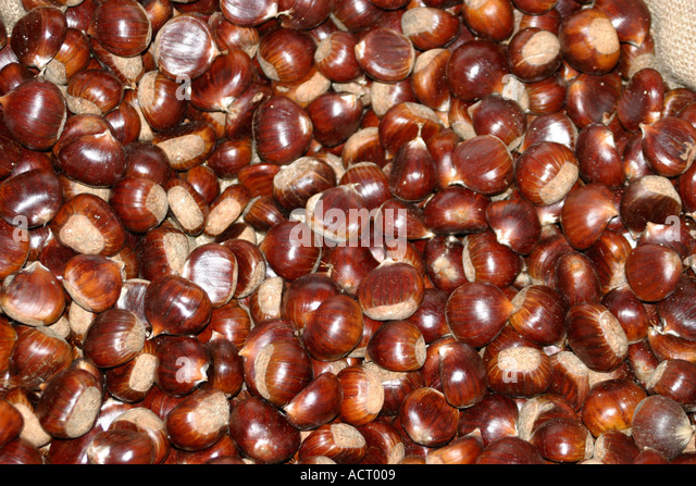 massed chestnuts at a Castagna festival in Le Marche, Italy - Stock Image