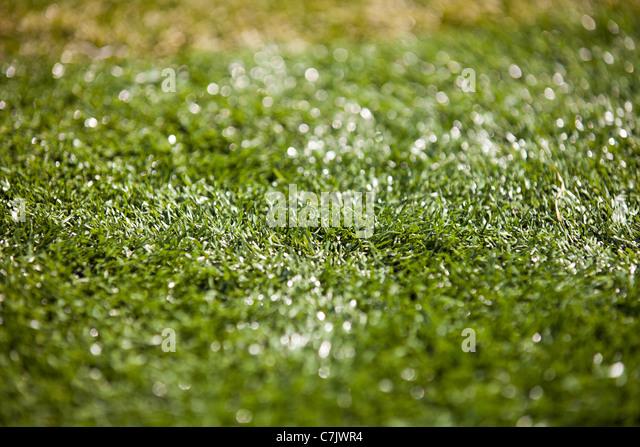 Imitation Grass - Stock Image