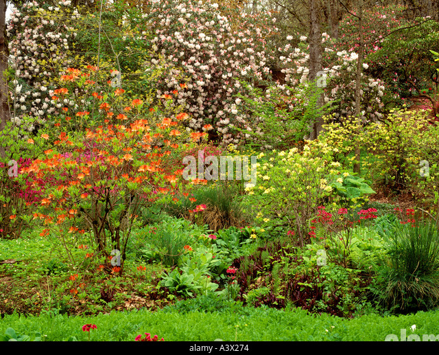 V00286M tif Garden at Hendricks Park with blooming rhododendrons and azaleas Eugene Oregon - Stock Image