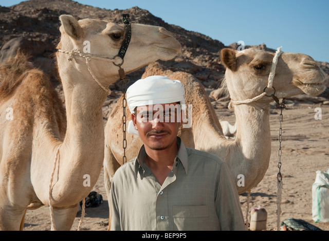 A bedouin with camels in the desert in Egypt - Stock Image