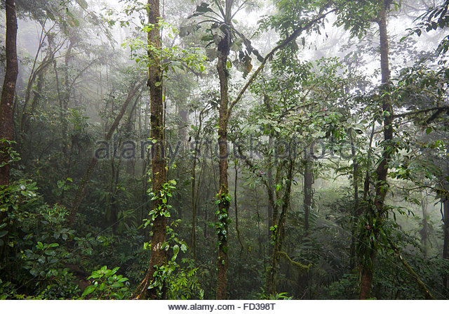 Misty day in the  cloudforest of Omar Torrijos national park, Cocle province, Republic of Panama. - Stock-Bilder