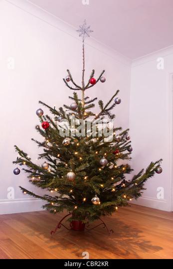 Live Christmas Tree Stock Photos Live Christmas Tree