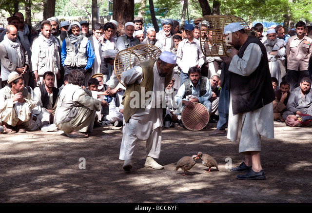 Fighting partridges draw a crowd to a Kabul city park on a Friday morning; owners stop the costly birds from damaging - Stock Image