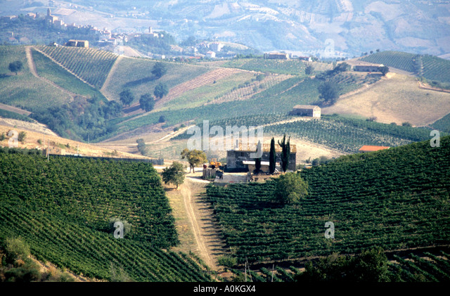 View of vineyards in the Le Marche province of Italy - Stock Image