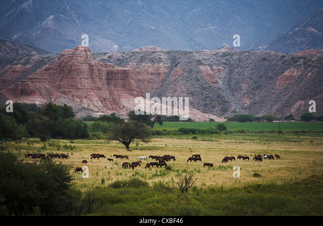 Landscape in Valles Calchaquies on the road between Cafayate and Cachi. Salta Province, Argentina. - Stock Image