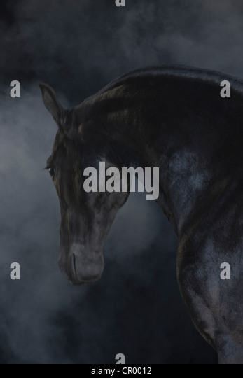 Black horse in foggy landscape - Stock Image