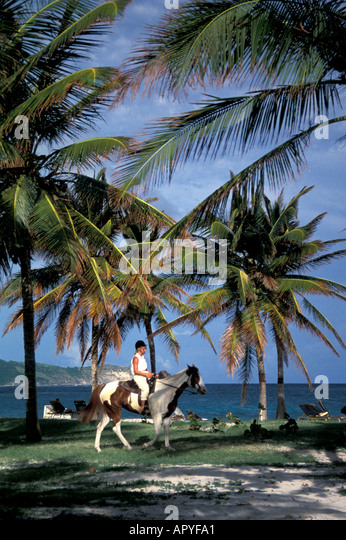 Antigua Horseback riding near the ocean with palm trees all around - Stock Image