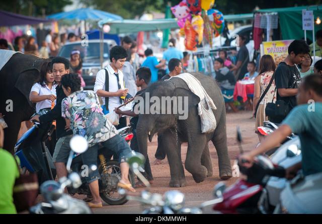 Street Beggar Elephants at Uttarardit Night Market, Thailand. - Stock-Bilder