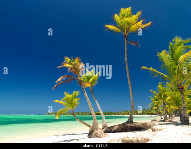 Dominican Republic Punta Cana Bavaro Beach palm trees on white sandy beach facing the sea - Stock Image
