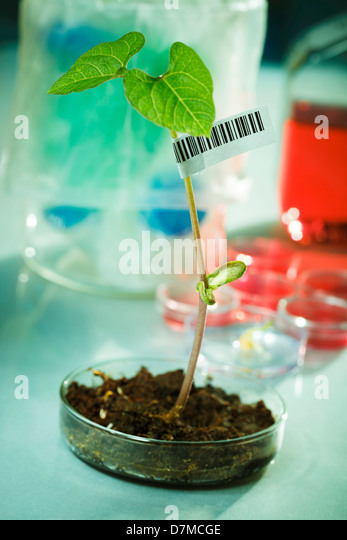 Plant research - Stock Image