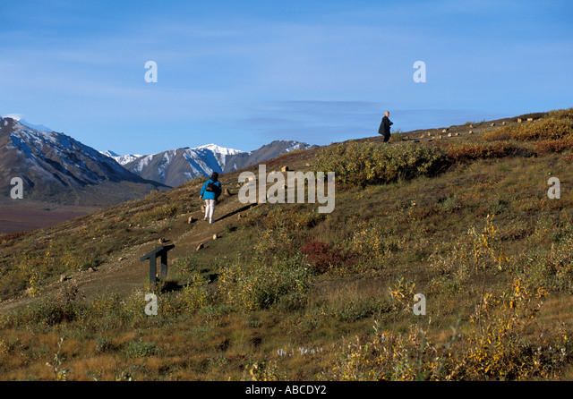 Alaska Denali National Park day hiking - Stock Image