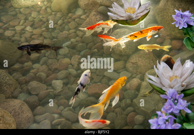 Show rock stock photos show rock stock images alamy for Fake fish for pond