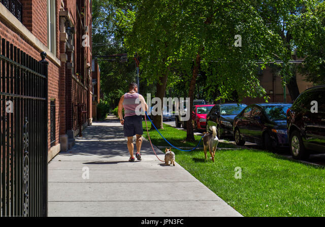 Girl Walking Down Sidewalk With Two Dogs