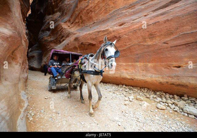 A horse carriage rushing through the Siq, The main entrance to the ancient Nabatean city of Petra. - Stock Image