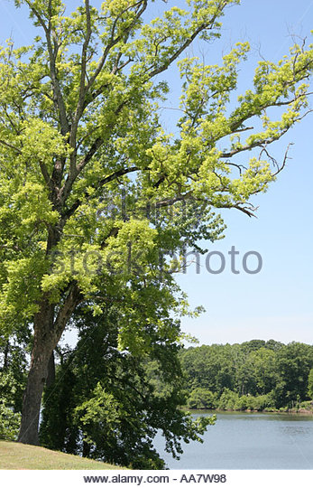 Tuscaloosa Alabama Black Warrior River Riverwalk trees scenery - Stock Image