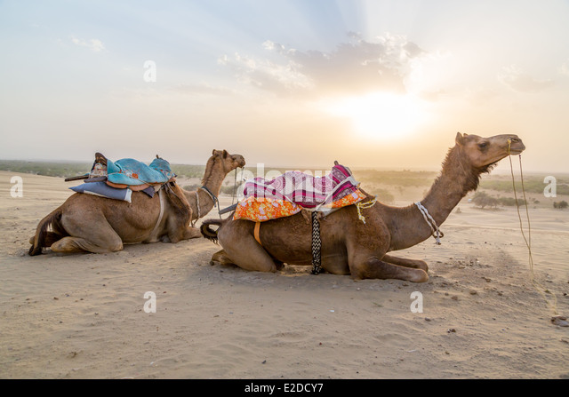 Camel Saddle Stock Photos & Camel Saddle Stock Images - Alamy
