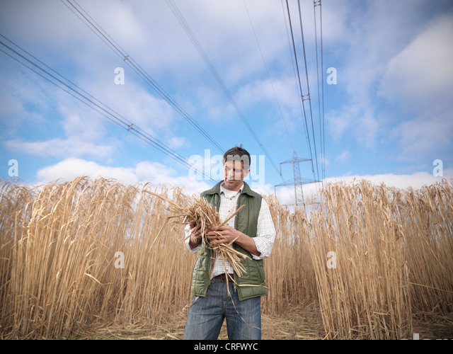 Farmer holding bunch of elephant grass - Stock Image