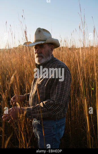 Portrait of senior male farmer in long grass, Plattsburg, Missouri, USA - Stock Image