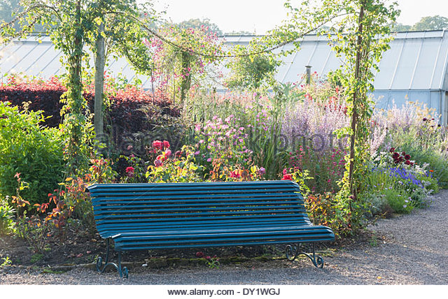 Bench in front of Victorian iron poles supporting Rosa 'American Pillar', with tall Salvia turkestanica - Stock Image