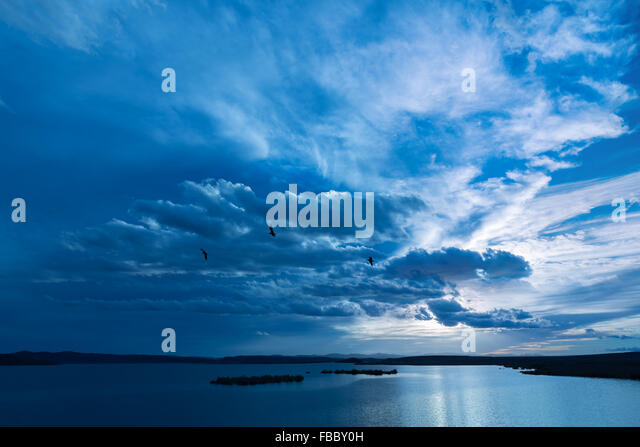 Birds flying against dark cloudy sky over water. - Stock Image