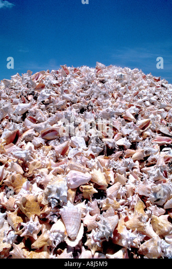 Tropics conch shells piled up - Stock Image