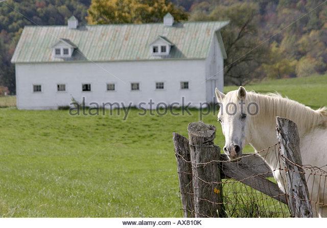 West Virginia Lewisburg white horse barn - Stock Image