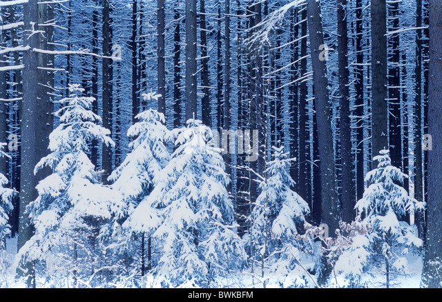 calm cold czech republic day daytime earth foliage forest natural nature nobody outdoor outdoors outside - Stock Image
