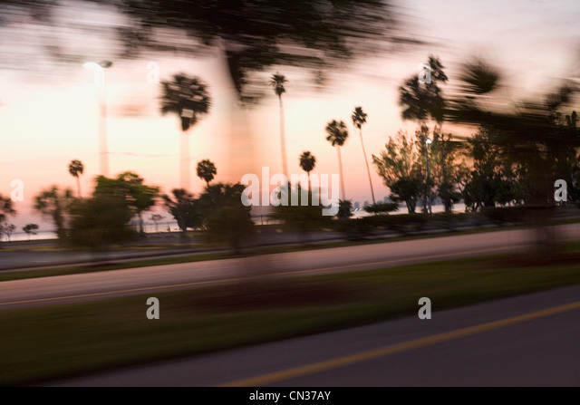 Palm trees at roadside, Miami, Florida, USA - Stock Image