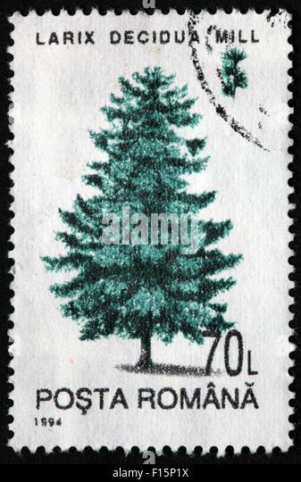 1994 Posta Romana tree 70L Larix Decidua Mill pine Stamp - Stock Image
