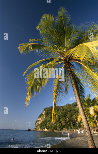 West Indies St. Lucia Anse Chastanet Resort Caribbean Sea shore palm tree - Stock Image