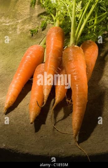 Carrot - Stock Image