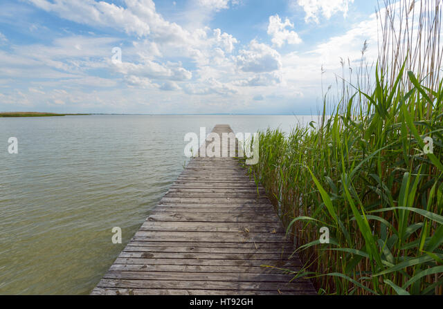 Wooden Jetty with Reeds at Weiden, Lake Neusiedl, Burgenland, Austria - Stock Image