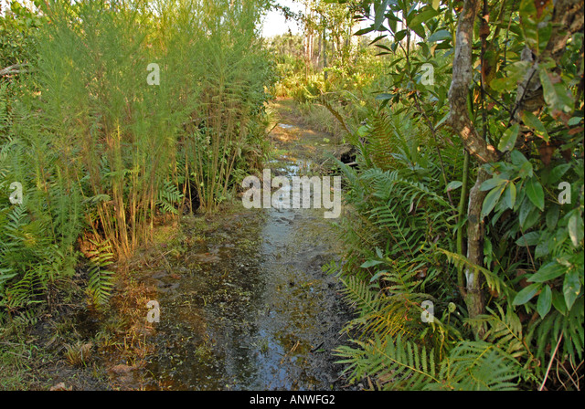 Florida Tiger Creek Preseve high water flooded trail - Stock Image