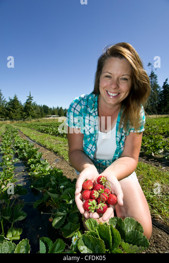 Strawberries fresh field Silver Meadows Farm near - Stock Image