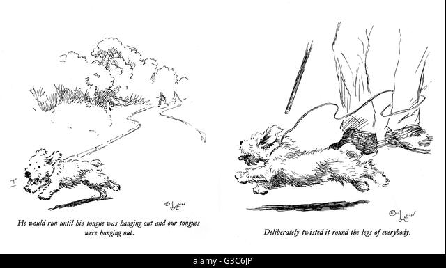 Illustrations of a Sealyham terrier called Bunch, by Cecil Aldin. Seen here running away from his owners (left) - Stock-Bilder