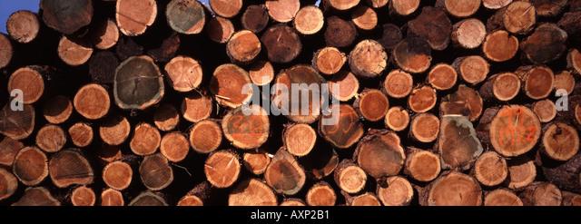 UK Logs cut timber pilled ready for transporting - Stock-Bilder