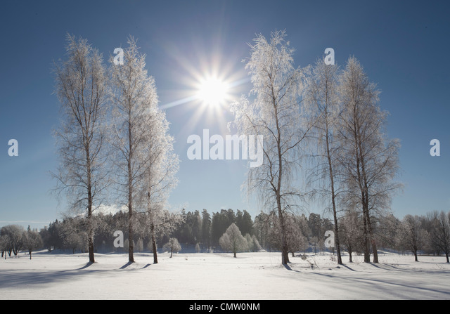Backlight in winter landscape - Stock Image
