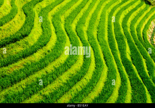 The amazing rice terraces at Long Ji, Guangxi - Stock Image