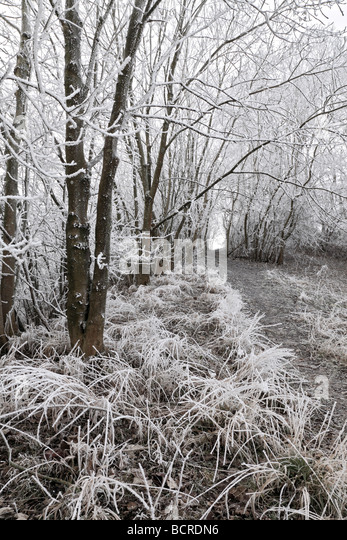 Frost at minus seven degrees centigrade. A frost covered tree line footpath, Washington, West Sussex - Stock Image