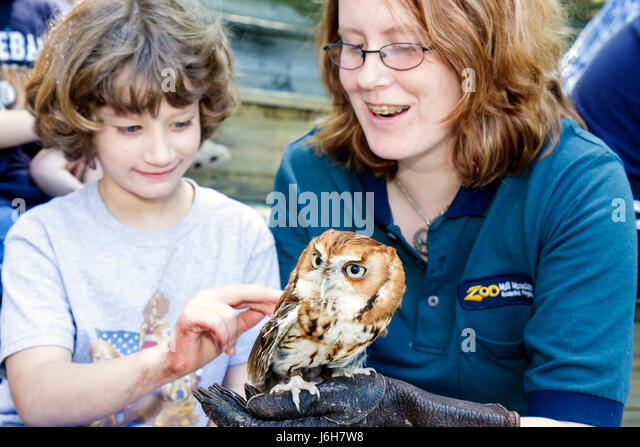 Virginia Roanoke Mill Mountain Zoo screech owl bird animal trainer girl student touch - Stock Image