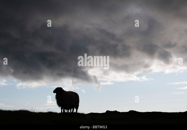 Sheep and storm clouds silhouette on the Isle of Harris, Outer Hebrides - Stock Image