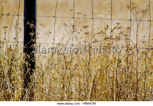 Romantic summer photo of golden wildflowers and grass against steel fence in Alentejo, Portugal. - Stock Image