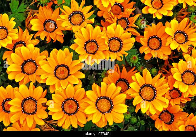 Europe, Portugal, Republica Portuguesa, Madeira, Camacha, street, flowers, anew, moulder, church, plants, flowers, - Stock Image