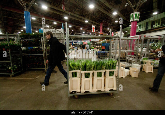 London UK. 10th February 2014. Wholesale market vendors sell flowers in New Covent Garden Flower Market stocking - Stock Image