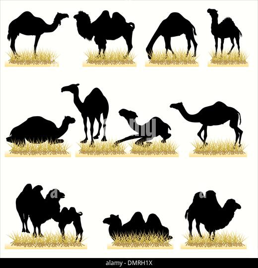 Camels silhouettes set - Stock Image